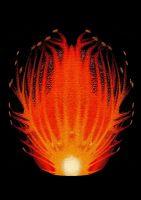 plameni-cvet